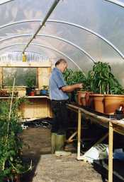 Tim attending to Chilli plants